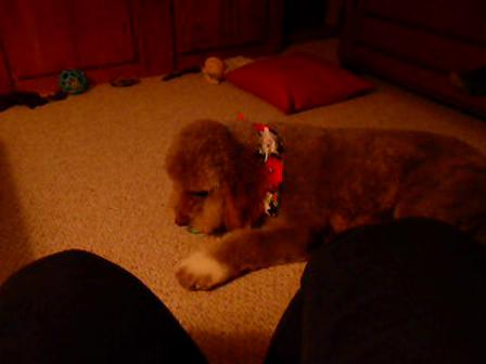 Daisy and her treat