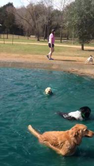 Toby's first swim