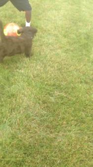 Dougie, The Ball Hog