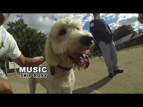 Midas the Goldendoodle at the park (using GoPro Hero3 and Go Pro Studio 2.0)