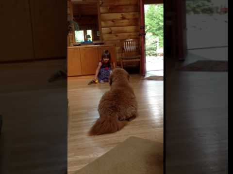 Dog Trainer in Training