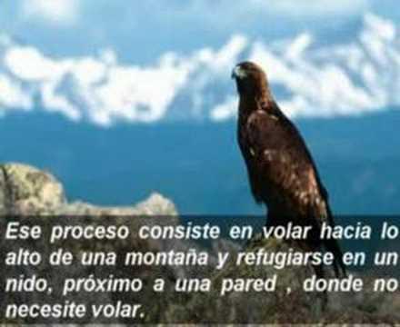 La Fabula del Aguila
