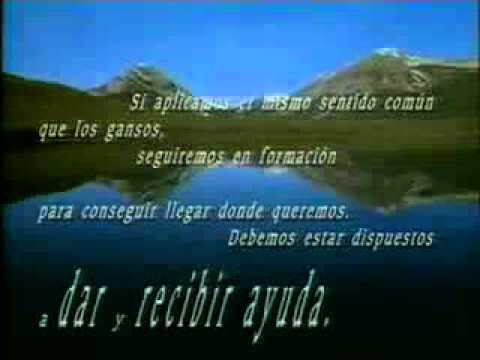 TRABAJO EN EQUIPO COMO LOS GANSOS           www.dpar.3a2.com