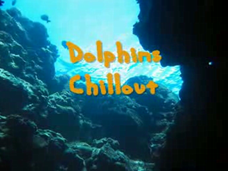 DOLPHINS CHILL OUT