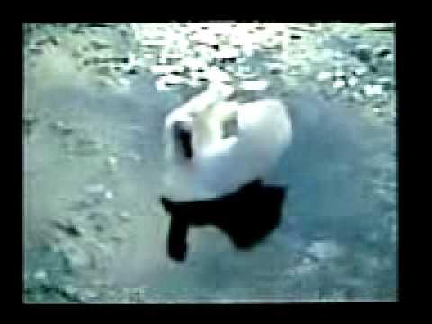 """SCHLAGERSINGLE (2003): Viel Leicht Wie Liebe A) """"LEICHT WIE LIEBE"""" B) """"VIELLEICHT"""""""