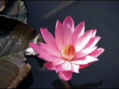 Lotus and  New Age