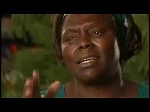 Taking Root The Vision of Wangari Maathai