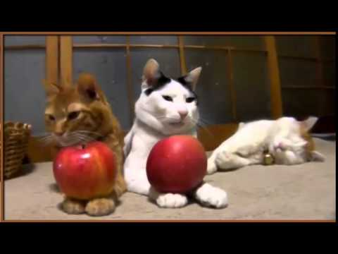 3 Cats Plays red Apples