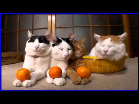 4 Funyy Cats Plays Together