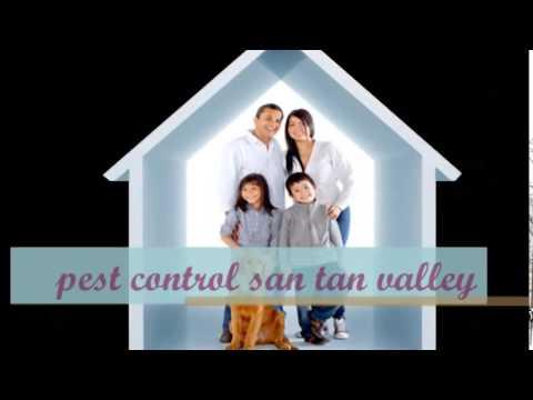 Pest control san tan valley