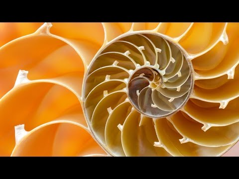 Complexity Theory: A short film