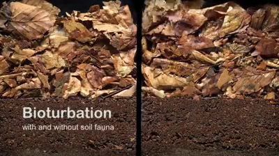 [Video]: Bioturbation (biocenosis en suelos)
