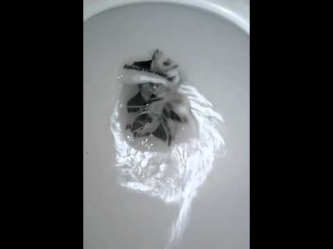 Trump Dump Toilet