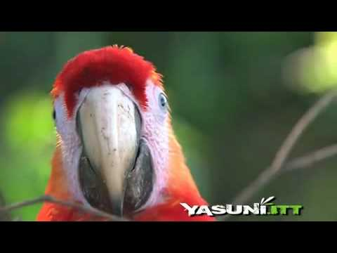 The Yasuni National Park, unique in the world