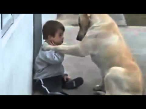 Child Care Dog - Shocking Video Of Love