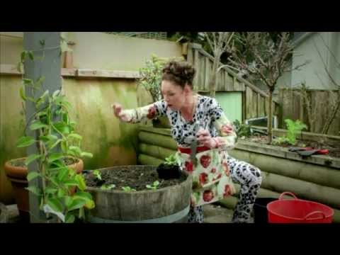 How to Grow Bok Choy, Coriander and Spring Onions Gardening Tutorial