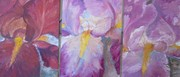 iris roses