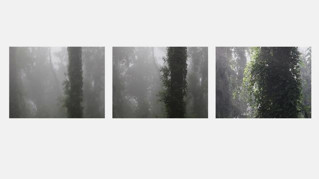 The Tree Alone (Parts I, II and III)