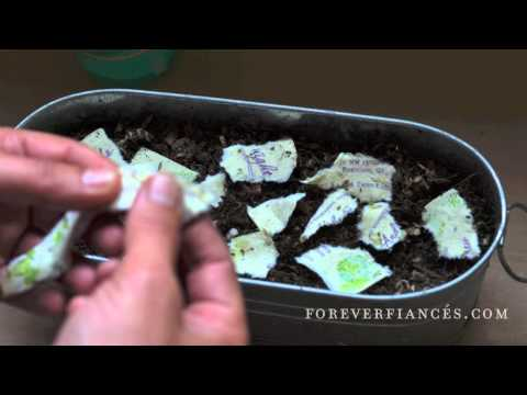 """How to Plant Seeded Invitations""""  ForeverFiances.com"""