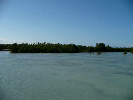 The Olango Island Wildlife Sanctuary (OIWS)