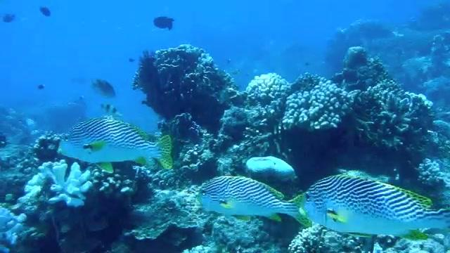 Bali Ramblings: Shortcut - Diving off Gili Trawangan