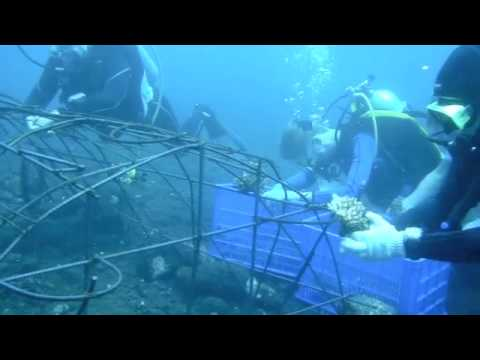 Shortcut- Biorock Artificial Reef