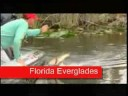 Florida Bass Fishing - Freshwater Fishing Video