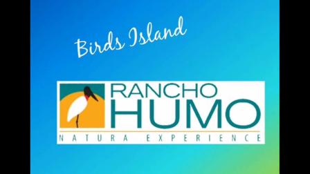 Ranchohumo-BirdsIsland