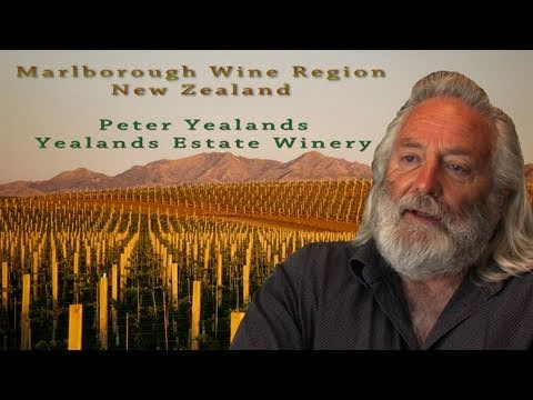 Marlborough Sauvignon Blanc Wine Region, New Zealand Travel Video Guide