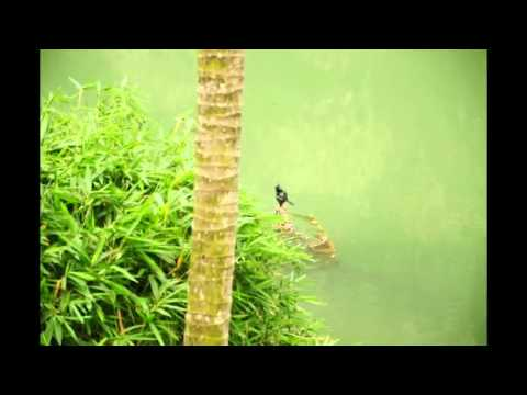 Bird.flv Bird's Bath from Tabernacle Home Stay