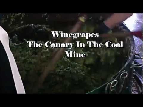 Wine And Climate Change   The Documentary by Paige Donner