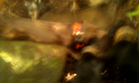 100LB BOA 9-15-2013 HEAT STOP UM DEAD COUNTRYCOONS TAP UM OUTT COUNTRYBOY CREW STYLE