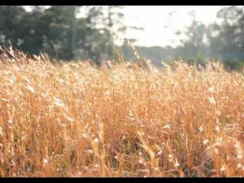 Song of the Meadowlark Trailer.wmv