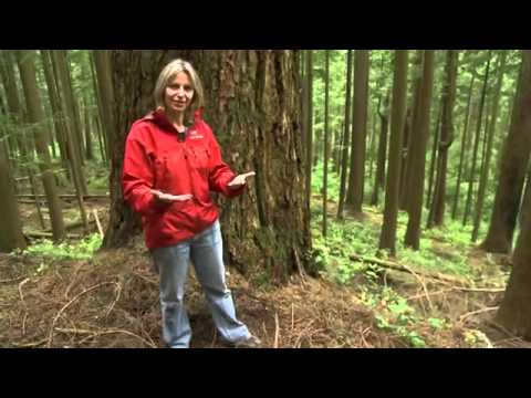 Do trees communicate