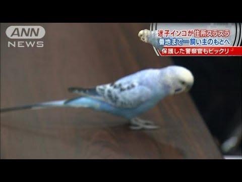 天才!迷子インコが住所スラスラ 飼い主のもとへ(12/05/02)