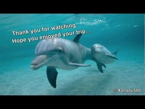 Sleeping Dolphin - Music and Nature sounds for Relaxation Meditation and Reiki