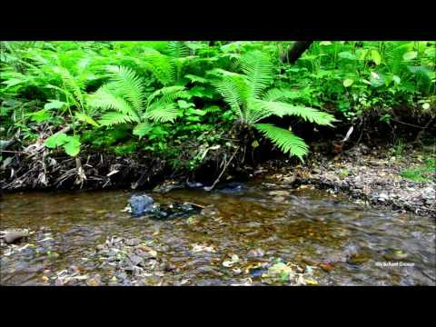 【The Best Relaxing sounds】River and Birds song  in Nature vol,3