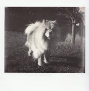 Incontri al parco: Lola
