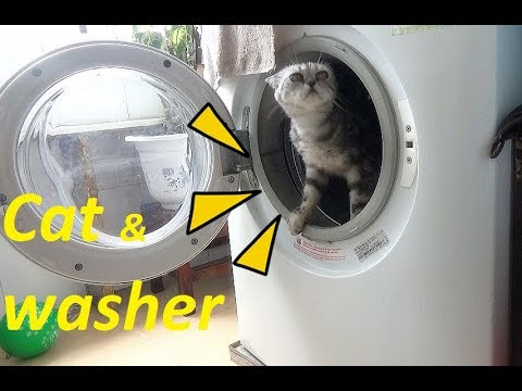Funny Cats In The Washing Machine | Cat vs Washer Videos 2017 | Meo Cover Home