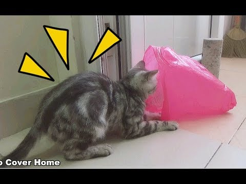 Cat Play With Plastic Bags So Funny| Funny Cats in Plastic Bags 2017 | Meo Cover Home