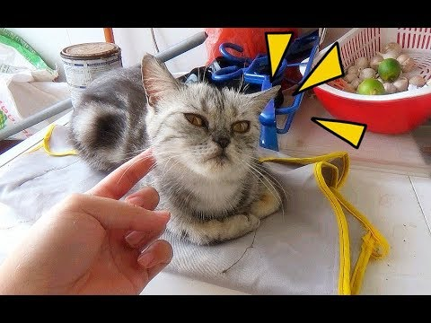 Funny Cat Eat Cheese In Washer - I Think She Can Eat Up A Bar Of Cheese.| Meo Cover Home