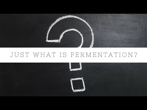 Trying to Figure Out What Fermentation Really Is? Video Explanation