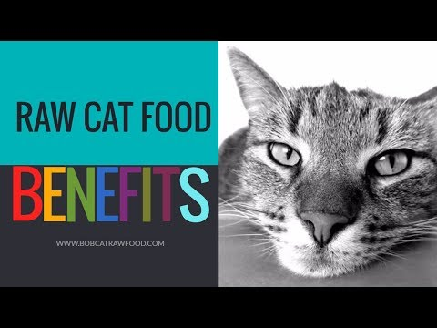 Raw Cat Food BENEFITS