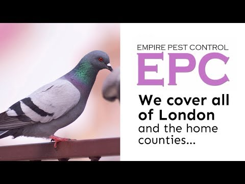 Pigeon Control Tips