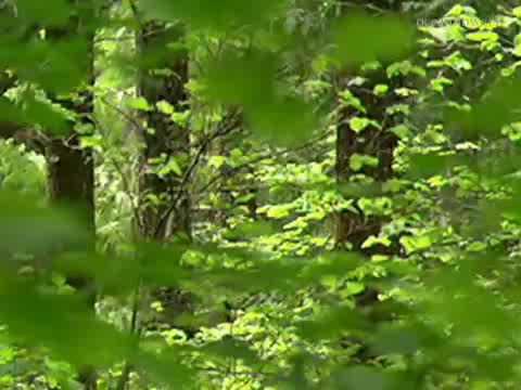 Vídeo-música de Relaxamento : ENYA  - The memory of the trees