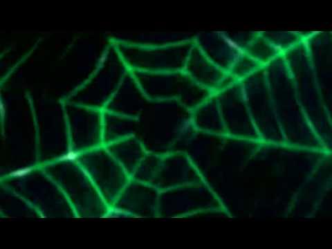 David Icke: Who Controls The Web?
