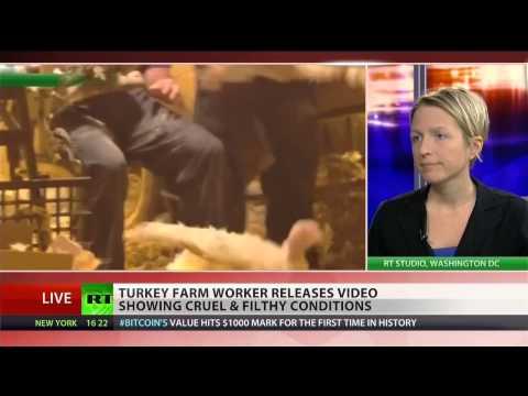 Shocking turkey abuse hidden from public
