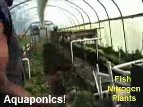 1 MILLION pounds of Food on 3 acres. 10,000 fish 500 yards compost