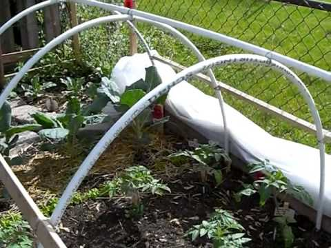 How to Make a Hoop House or Green House for Cheap.