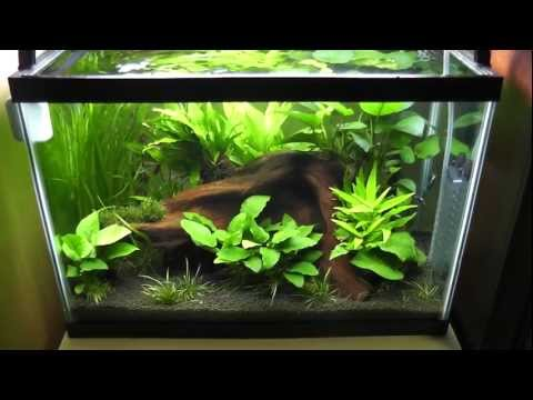 Guppy and tetra tank (Planted Tank update 2)